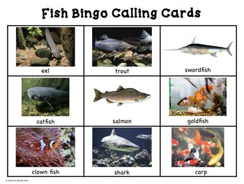Fish Bingo and Posters