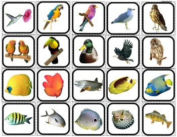 """Fish & Birds"" Match and Sort for Autism"