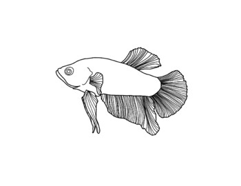 Betta Fish coloring page | Free Printable Coloring Pages | 270x350