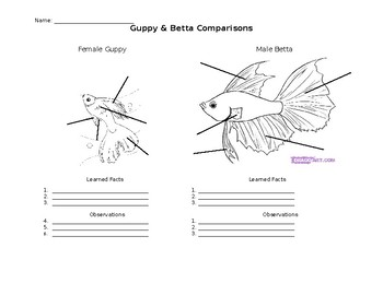 Fish Comparison (Guppy & Betta)