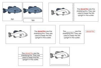 Fish Definition Set