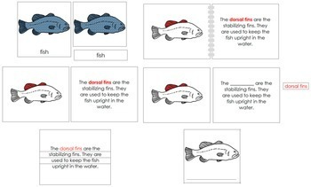 Fish Definition Set (Red)