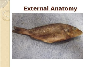 Fish Dissection Guide