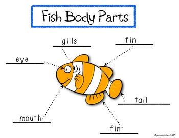 Fish Facts: A Mini Unit