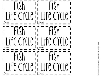 Fish Life Cyle Craft