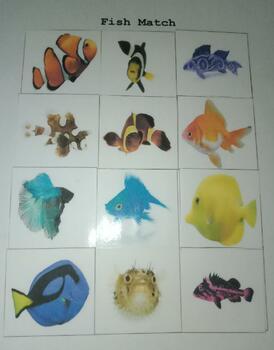 Fish Match