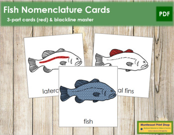 Fish Nomenclature Cards (Red)