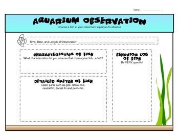 Fish (Aquarium) Observation