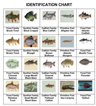 Fish Photo safari Game