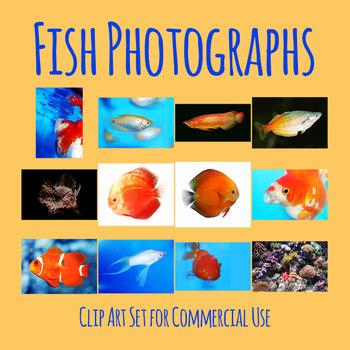 Fish Photos / Aquarium Photographic Clip Art Commercial Use