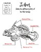 Fish. Research Template Packet. Apologia Zoology 2. Lesson 6