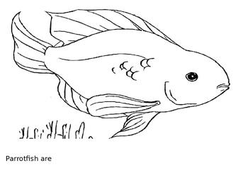 Fish Rigby Book