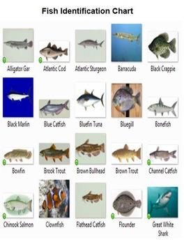 Fish Rummy