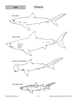 Fish: Sharks and Facts About Fish