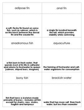 Fish Vocabulary Bingo