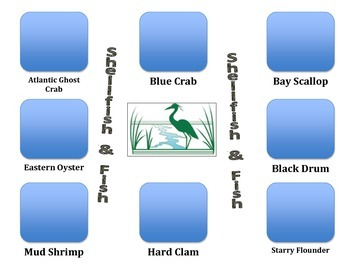 Fish and Shellfish in the Estuary (Pairs Great With Water Cycle)