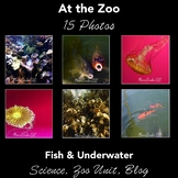 Stock Photos - Fish and Underwater Life - 15 Photographs