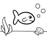 Fish - coloring sheet (PreK-1st)