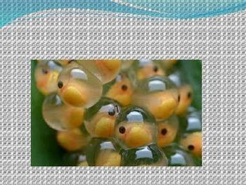 Fish fact Power Point (science, ESL, Reading, Language)