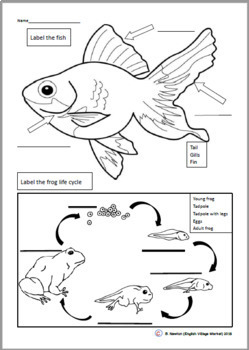 Fish is Fish PowerPoint /Smart board activities and worksheet