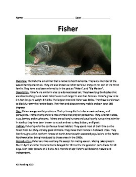 Fisher Cat - Review Article Information Facts Questions Vocabulary