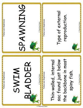 Fishes and Amphibians Vocabulary Cards