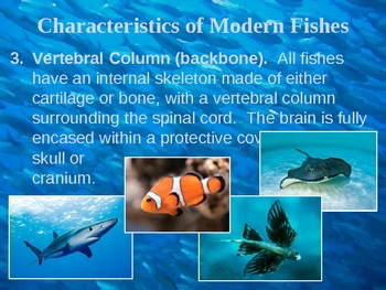 Fishes and Amphibians PowerPoint Presentation Lesson Plan