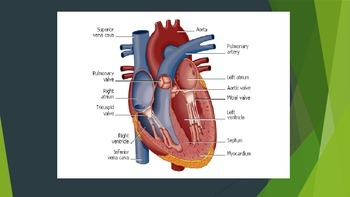 Fitness Instructor Anatomy and Physiology