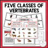 Five Classes of Vertebrates Sorting | Nature Curriculum in Cards