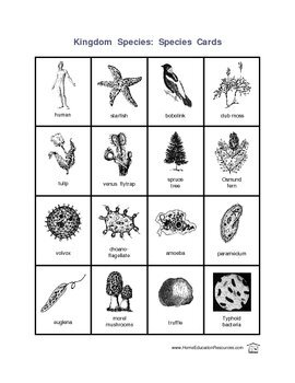 Five Kingdoms Worksheets
