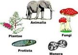 Five Kingdoms of Living Things