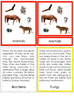 Five Kingdoms of Life Montessori 3-part cards + description cards