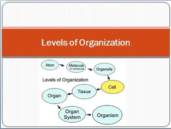 Five Levels of Organization PowerPoint, Project, and Quiz
