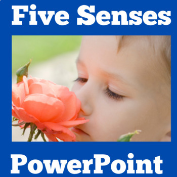 Five Senses Activity | 5 Senses PowerPoint | Five Senses Science