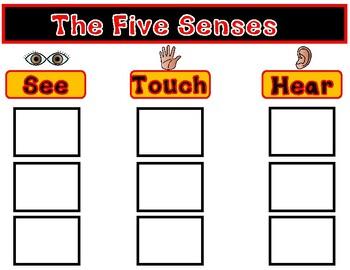 Five Senses:  A Sorting Center for The Five Senses