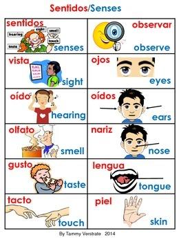Five Senses Bilingual Poster