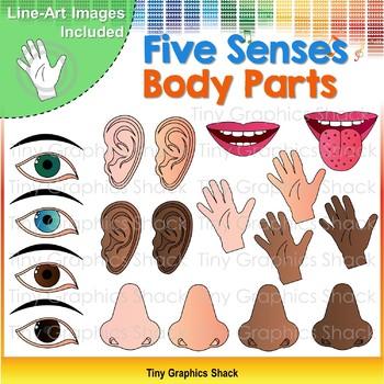 Five Senses Body Parts Clip Art