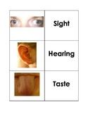 Five Senses Cards