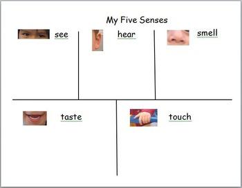 Five Senses Chart