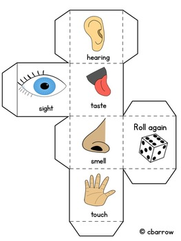 Five Senses Cube Rolling Activity