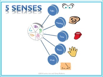 Five Senses, ESL Interactive notebook, Teach English