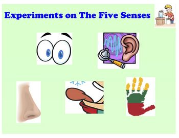 Five Senses Experiments for Elementary Students