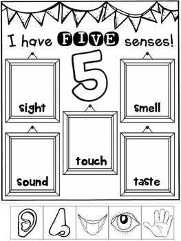 five senses freebie science activities interactive and engaging