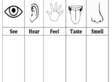 Five Senses Graphic Organizer