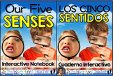 Five Senses Interactive Notebook {ENGLISH & SPANISH}