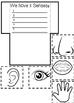 Five Senses Interactive Notebook and Activities