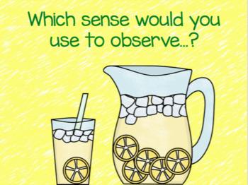 Five Senses Interactive Review