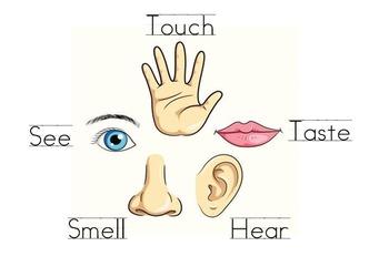 Five Senses Interavtice Mimio
