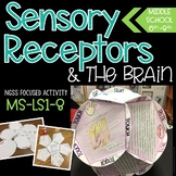 Five Senses, Memories, and The Brain Project - NGSS Aligne