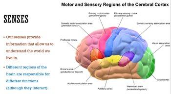 Five Senses (Next Generation Science Standards)